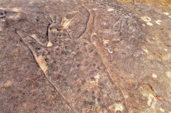 FinchelyWalking Track Rock Art