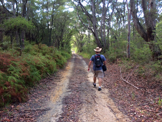 Gosford Glyphs hiker